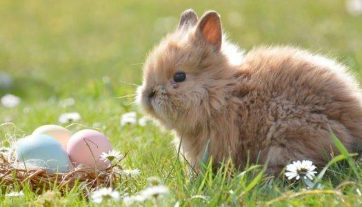 ¿Por qué se celebra Pascua?