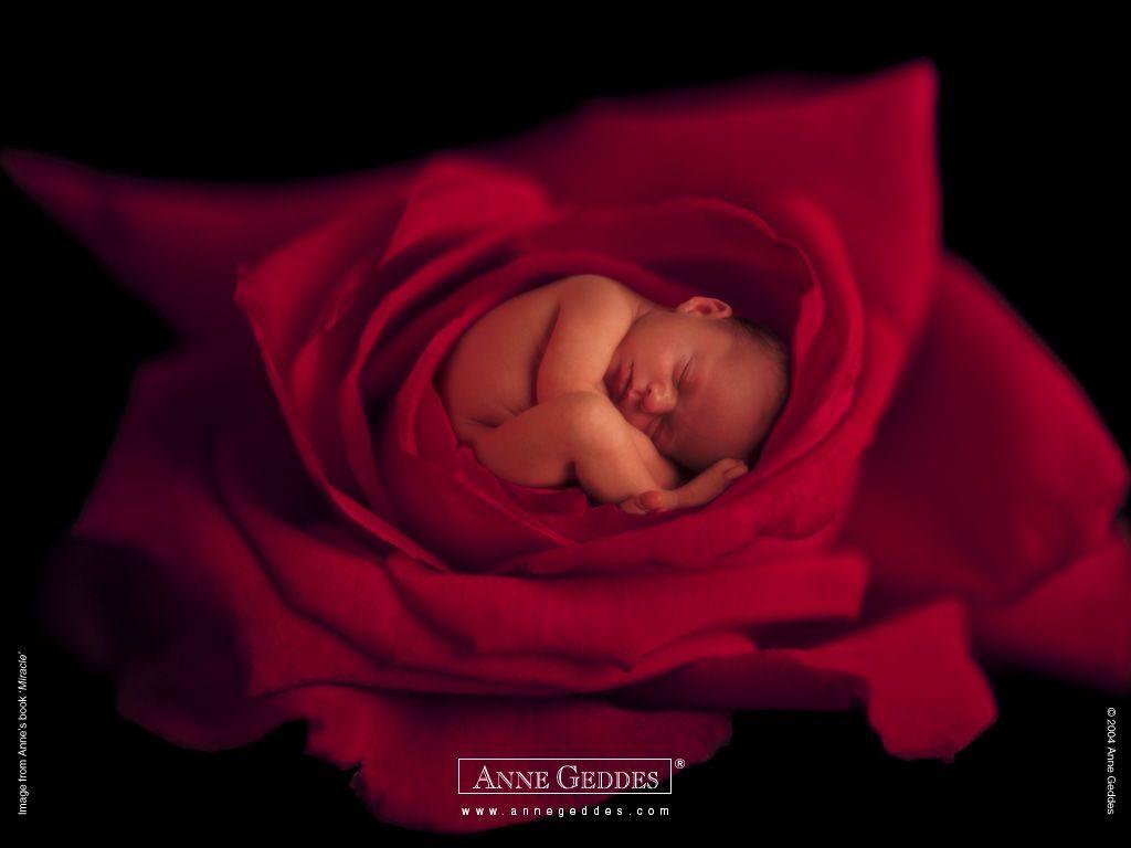 muñecas Anne Geddes fotografía